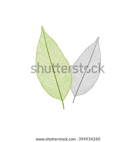 Isolated green and yellow leaf with veins. - stock vector
