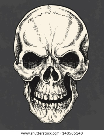Isolated Hand Drawn Pen and Ink Skull - stock vector