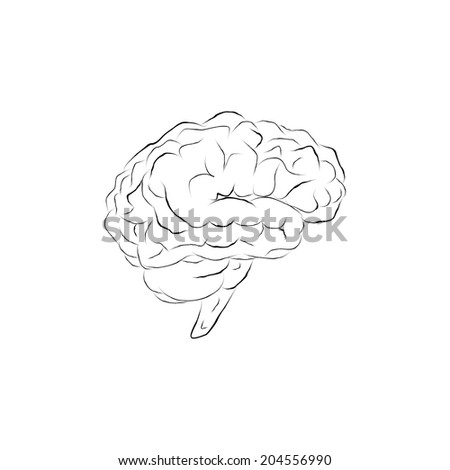 Isolated human brain sketch. Doodle human brain. Planning. Brainstorming.  - stock vector