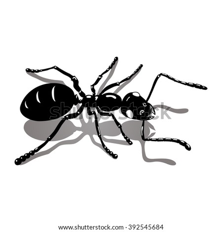 Isolated illustration ant icon vector image