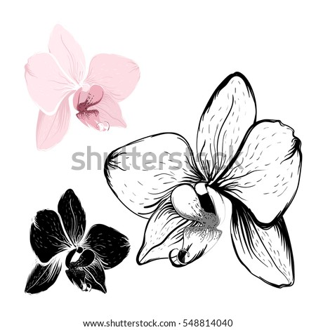 Isolated Orchid Flowers On White Background Stockvector 548814040