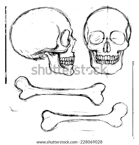 Isolated pencil hand drawn human skull and tibia bones, front and side view; vector objects - stock vector