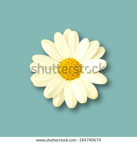 Isolated Realistic Daisy flower. Spring Vector illustration. - stock vector