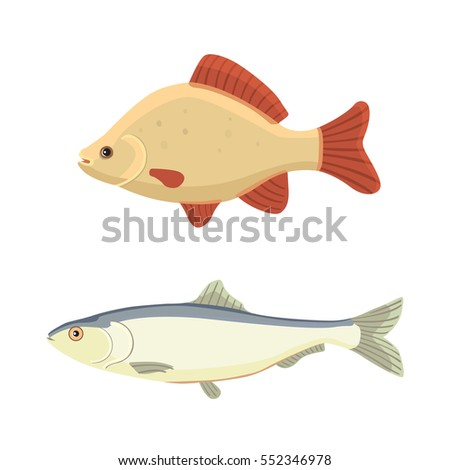 Cartoon catfish stock images royalty free images for Cute freshwater fish