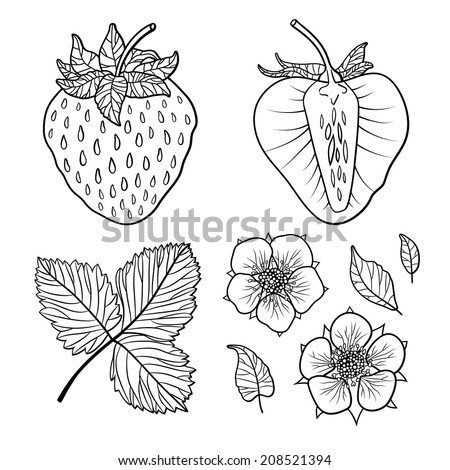 Isolated strawberries. Graphic stylized drawing. Vector illustration. Black and white - stock vector