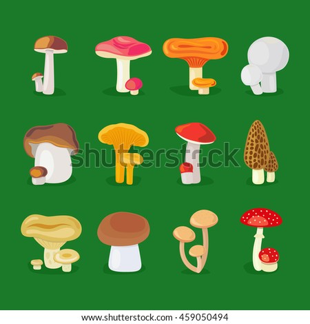 Isolated vector mushrooms. Edible fungus, mushrooms and toadstools illustration - stock vector