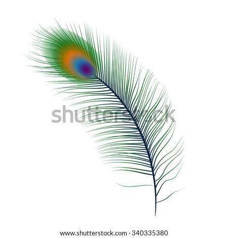 Isolated vector peacock feather illustration on white background. Best element for wedding cards, valentines postcards, detailed vector in green, turquoise, blue, orange, purple colors - stock vector