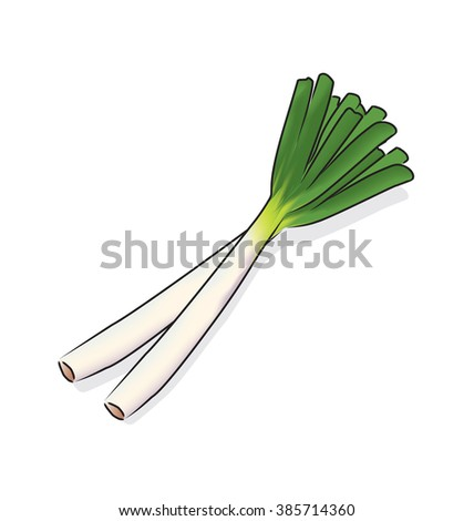 Japanese bunching onion or Welsh onion.