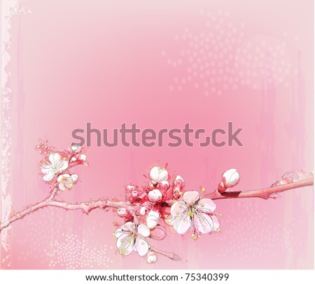 japanese cherry blossoms in full bloom - stock vector