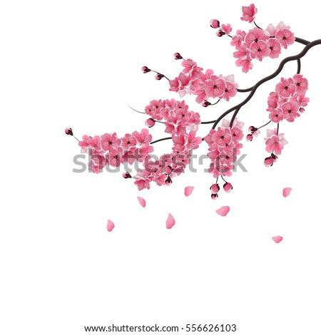 Sakura Vector Stock Images Royalty Free Images amp Vectors