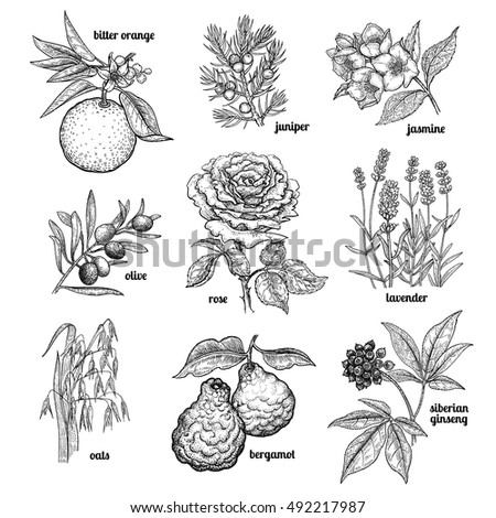 Tree Engraving Stock Images Royalty Free Images Vectors