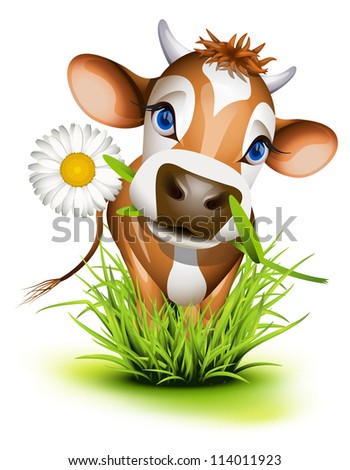 Jersey cow in green grass