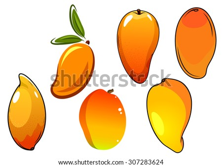 Juicy tropical mango fruits with orange skin and green pointed leaves, for agriculture or healthy food design - stock vector