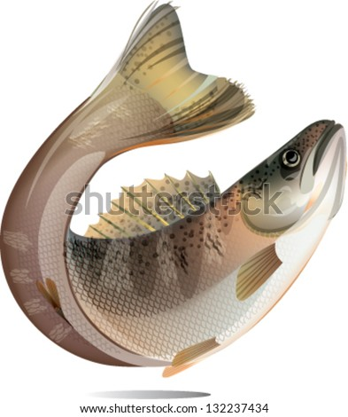 Jumping salmon fish isolated on white background. - stock vector