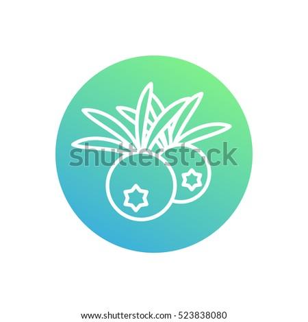 Juniper Berries Line Icon Healthy Organic Stock Vector 523838080