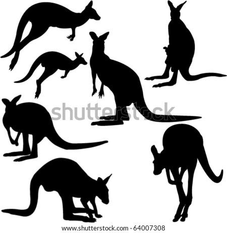 kangaroo - vector - stock vector