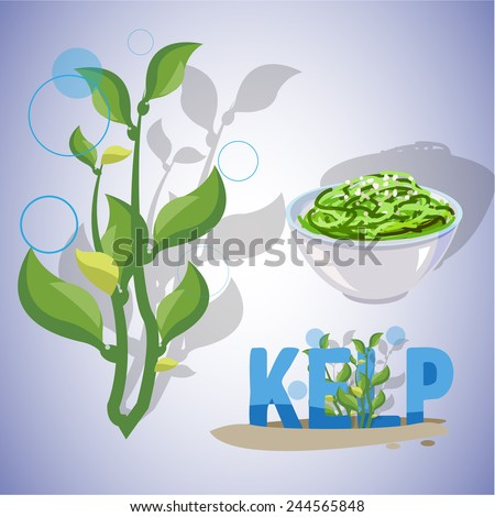 kelp seaweeds - vector illustration - stock vector