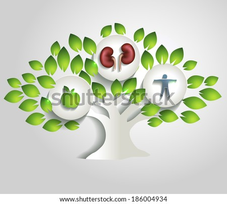 Kidneys and tree, healthy lifestyle concept. Healthy food; healthy kidneys and healthy human. - stock vector