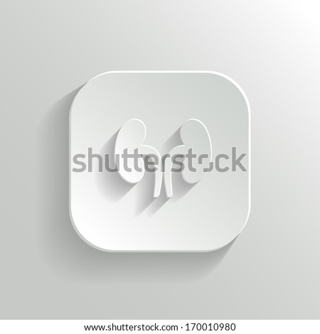 Kidneys icon - vector white app button with shadow - stock vector