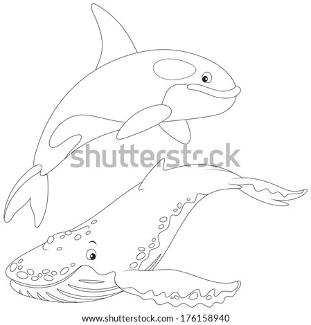 killer whale and hunchbacked whale - stock vector