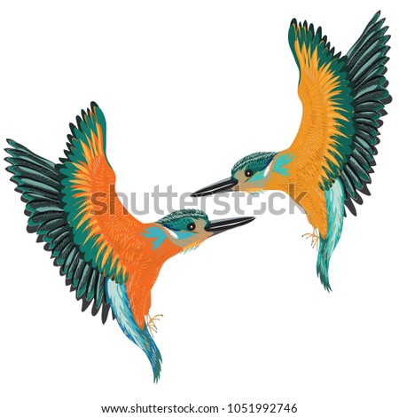 Kingfishers flying. Vector illustration of two birds on white background