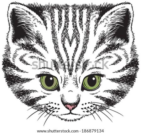 Kitten portrait: Vector sketch of a stylized cat's face - stock vector