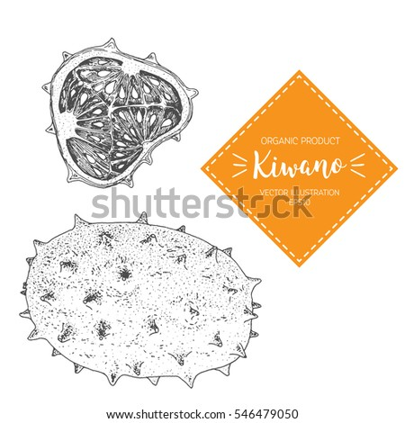 kiwano vector illustration hand drawn design element a fruit drawn in vintage style