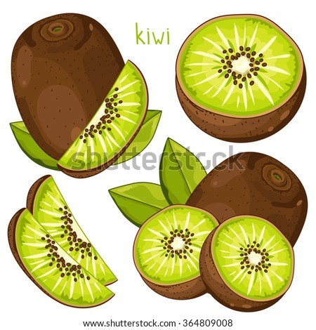 Kiwi isolated vector on white background