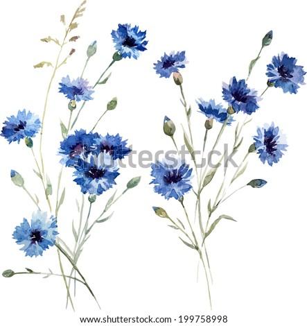 knapweed, watercolor, drawing - stock vector