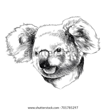 Koala Head Stock Images, Royalty-Free Images & Vectors ...