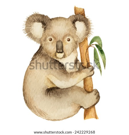 Koala, watercolor vector illustration isolated on white background.