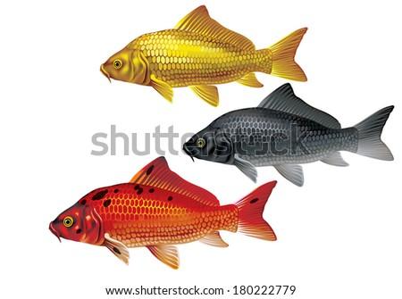 Koi carp gold red black cyprinus stock vector 180222779 for Red koi carp