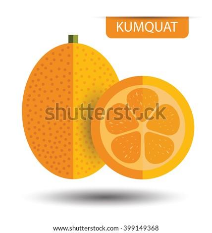 Kumquat, fruit vector illustration - stock vector