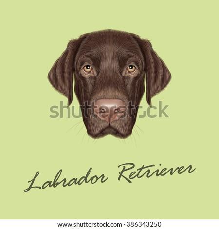 Labrador Retriever Dog portrait. Vector illustrated portrait of Chocolate Labrador on green background. - stock vector