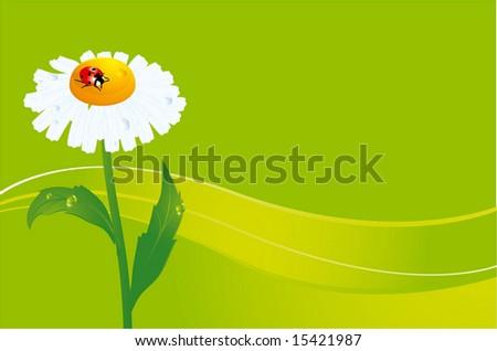 ladybird on daisy. vectror background. - stock vector
