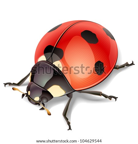 Ladybird-vector illustration - stock vector
