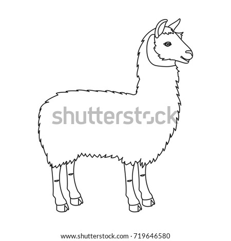 lama south american pack animal lame stock vector royalty free