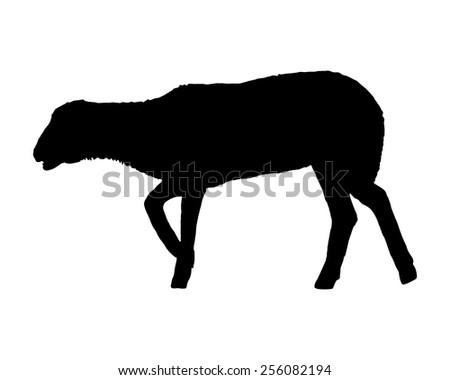 Lamb on white - stock vector