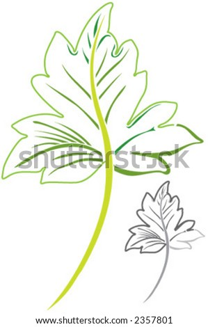 laminated, folio, natural, leaf, sheet - stock vector