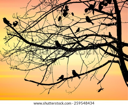 Landscape Scene of branch big Tree Silhouetted against a Beautiful Cloudy Sky at Sunset and bird. - stock vector