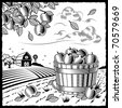 Landscape with apple harvest black and white. Vector - stock photo