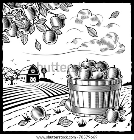 Landscape with apple harvest black and white. Vector - stock vector