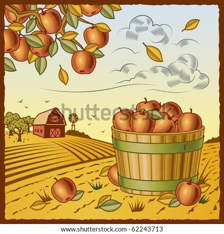 Landscape with apple harvest. Vector - stock vector