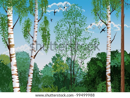 Landscape with trunks of birches and pine tree in the foreground and silhouettes of different trees in the background - stock vector