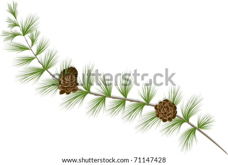 Larch Branch - stock vector