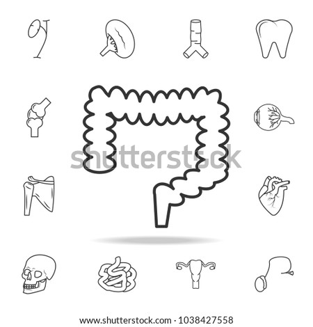 Large intestine icon. Detailed set of human body part icons. Premium quality graphic design. One of the collection icons for websites, web design, mobile app on white background