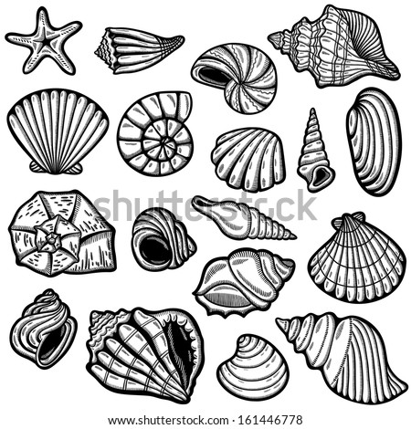 Large set of black&white graphic sea shells. Isolated objects on white background. Retro style. - stock vector