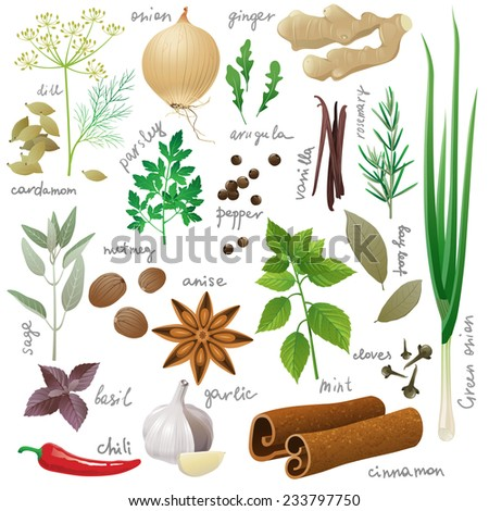 Large set of herbs and spices - stock vector