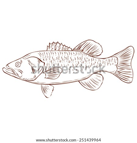 Largemouth Bass isolated on white. Hand drawn vector illustration. - stock vector