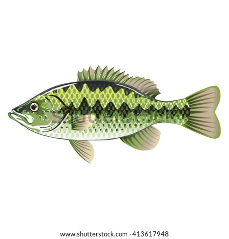 Largemouth Spotted Green American Bass Vector - stock vector